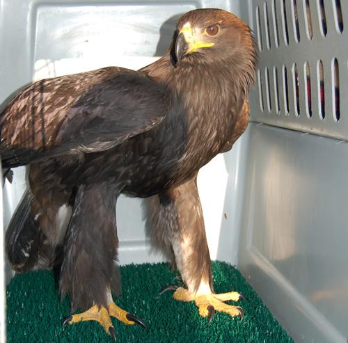 Wildlife Rehabilitation - Born Free - Steamboat Springs, CO